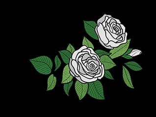 Nota olfattiva rosa bianca